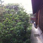 名古屋市 西区 植栽 伐採 植木 ビフォーアフター